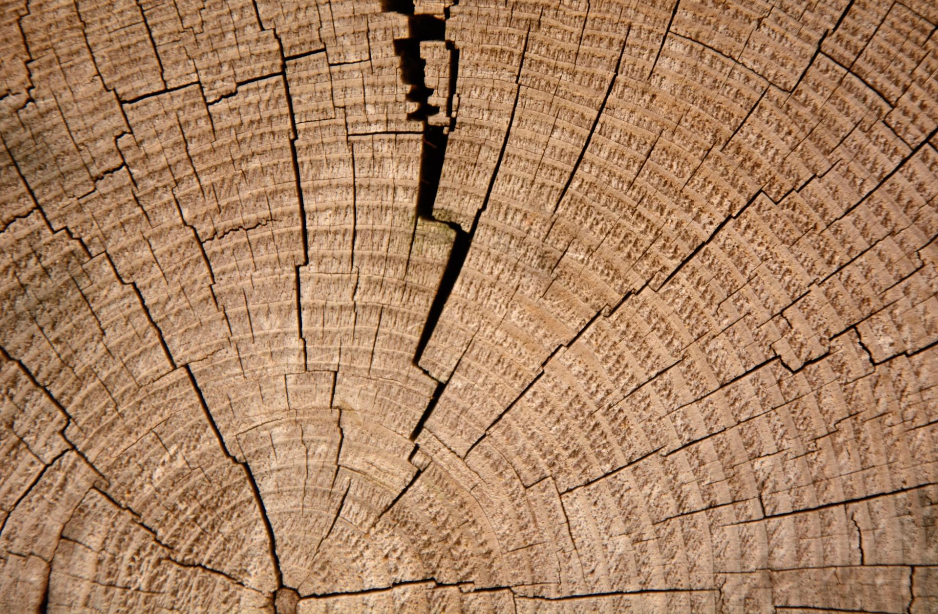 Wood Resin Engagement Rings