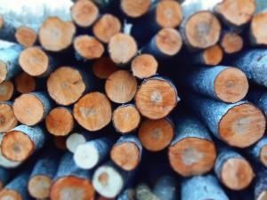 préjugés sur le bois