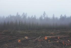 gestion durable des forets