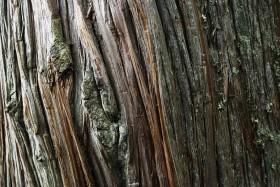 Essence de Bois Cedar