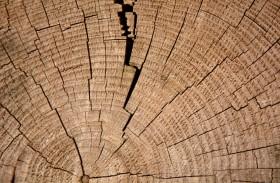 idées reçues bois